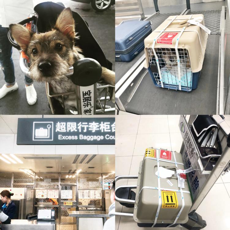 深圳宠物航空托运流程
